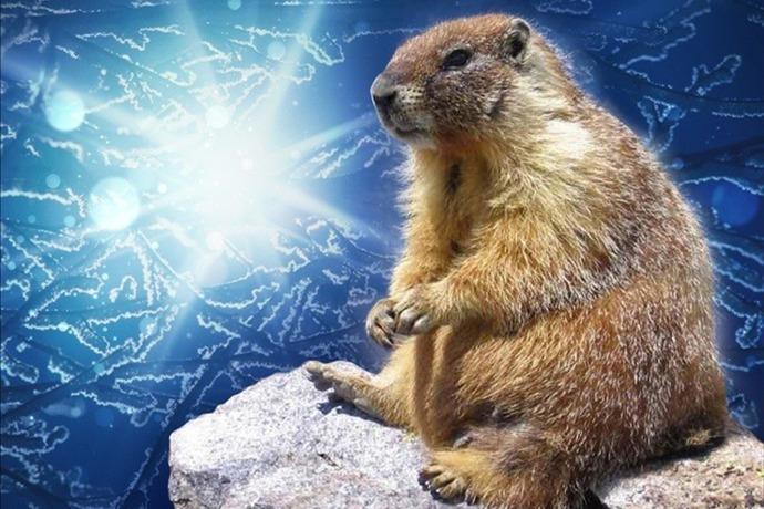 Groundhog Winter _-8120421510445905301