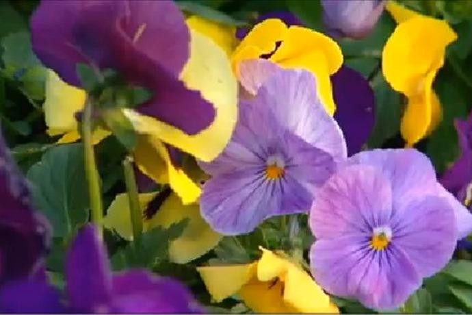 Spring Flowers Generic_-3099025545853908770