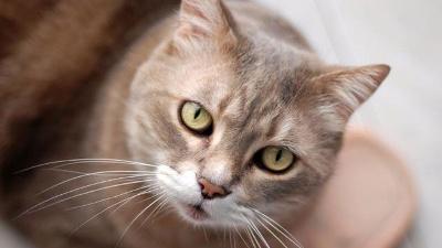 cat-looking-at-camera-jpg_20160520150001-159532