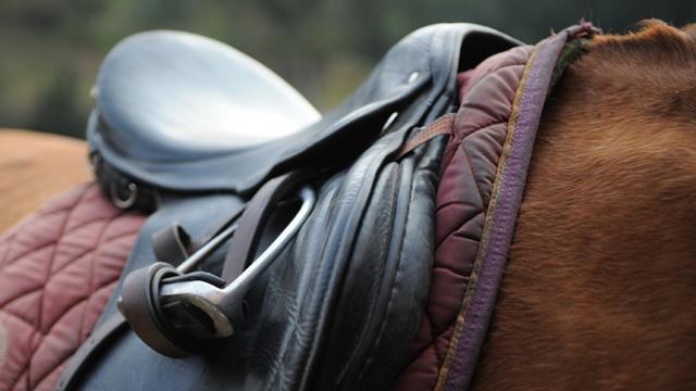 Horse, saddle, horseback riding_3186922853358388-159532