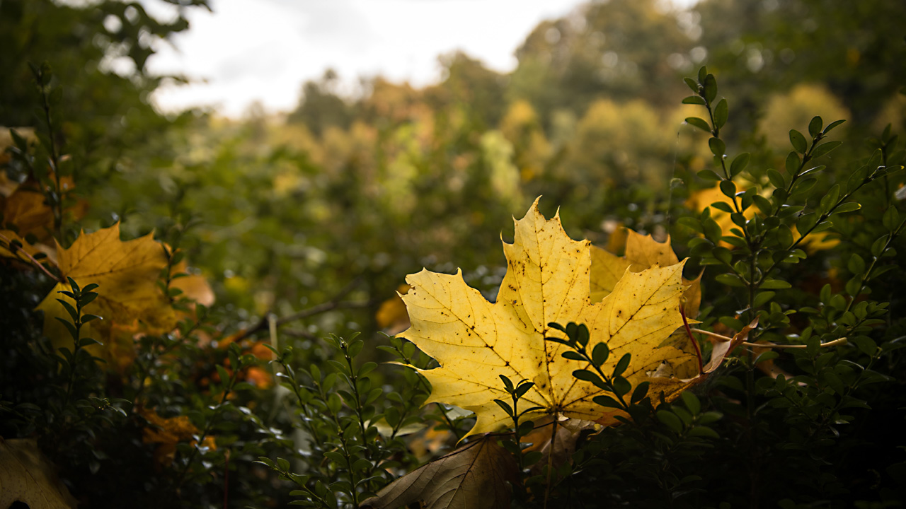 fall leaves28635591-159532