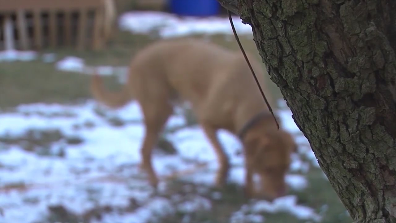 First Winter Libre's Law In Effect for Pets