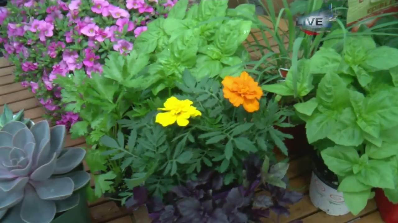 Gardening Tips Live 4
