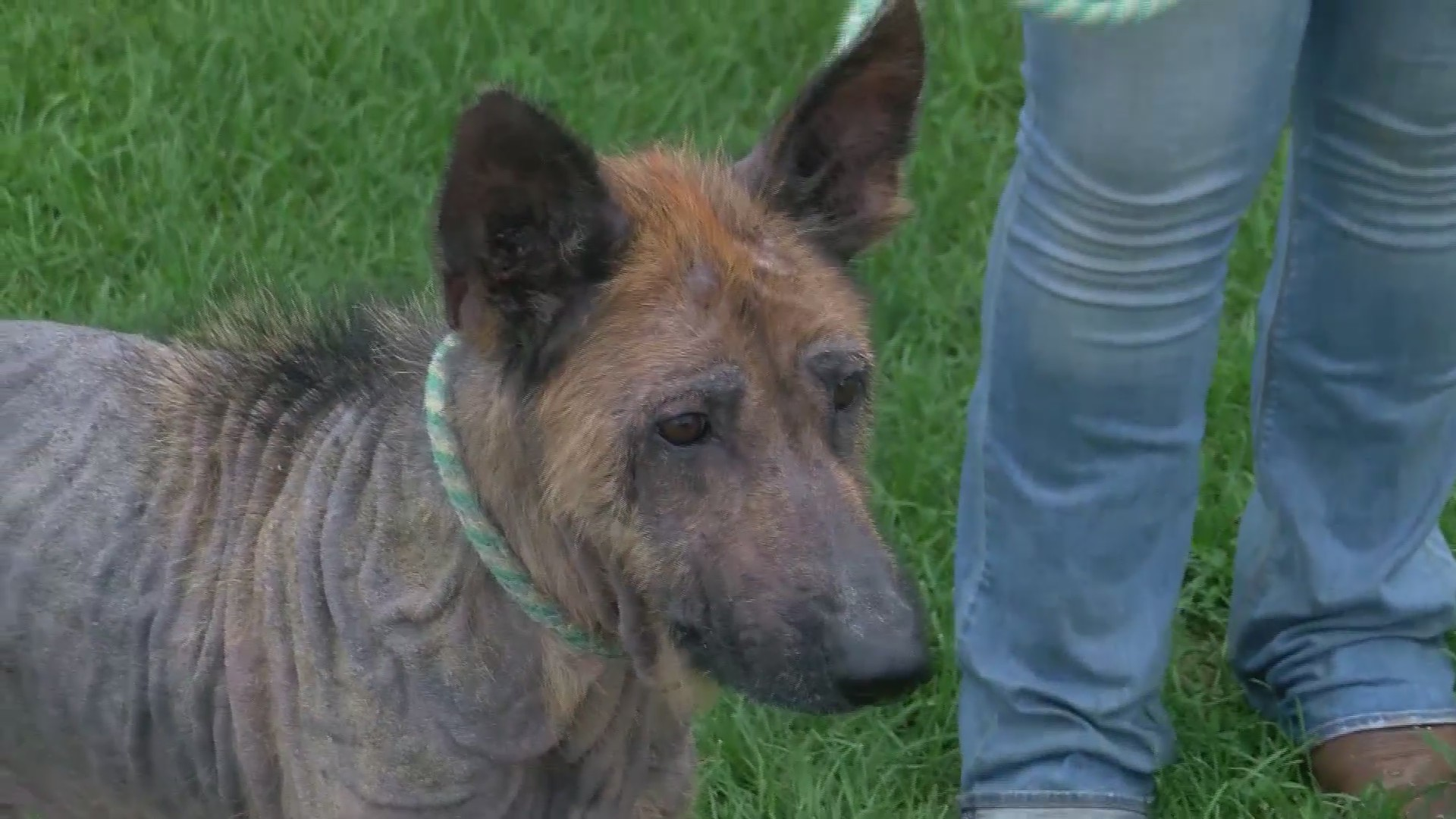 Animal Neglect Investigation