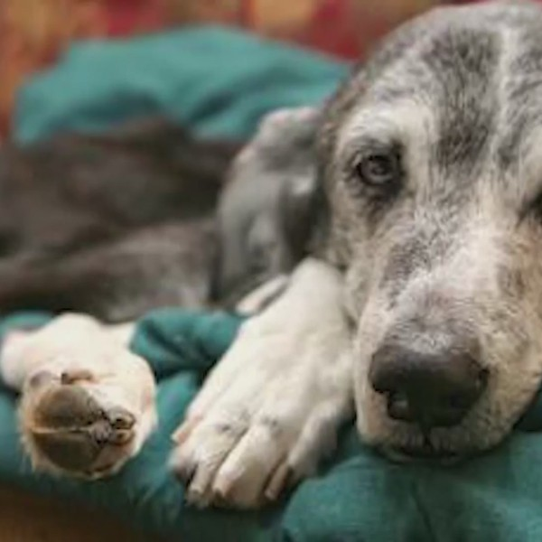Special Report: Animal Hospice