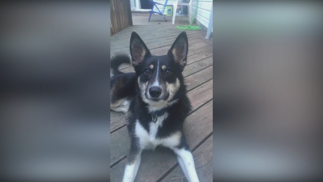 Family Heartbroken After Deadly Dog Attack in Monroe County