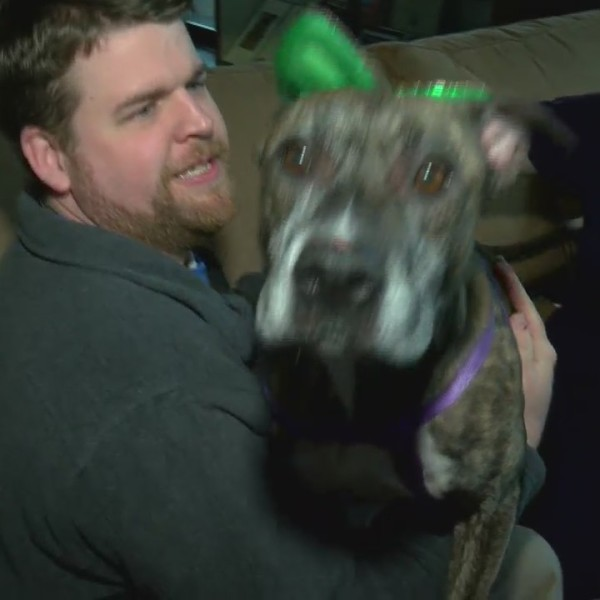 Pet of the Week Cora March 22, 2019