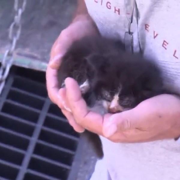 Kitten_Rescued_from_Drain_in_Pittston_0_20190612160829