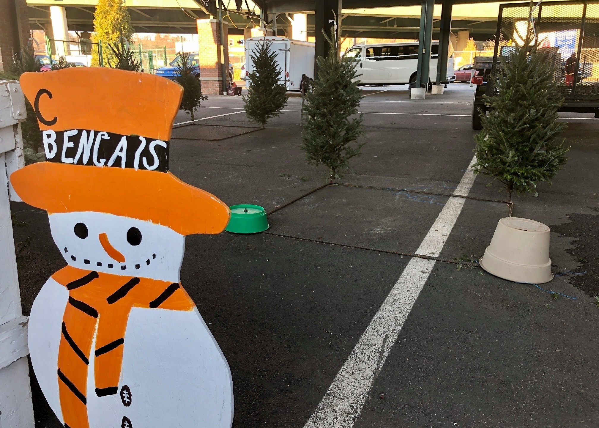 Shop early': US Christmas trees supplies tight, prices up