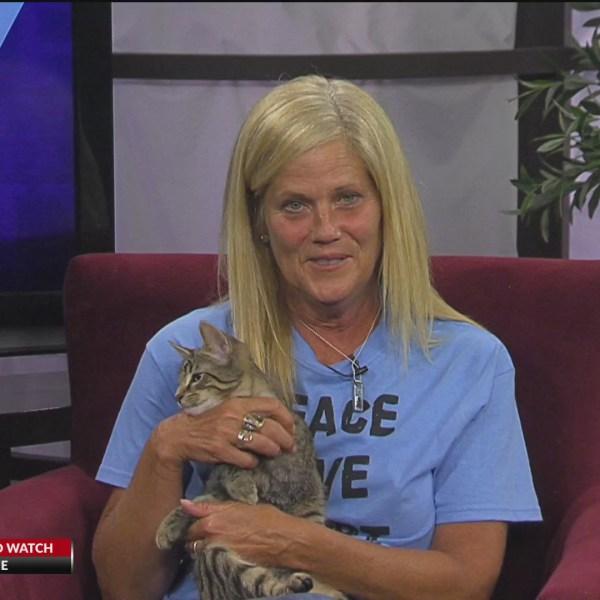 PAlive! SPCA Luzerne County August 3, 2020