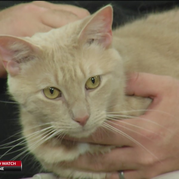 PA live! Pet of the Week July 12, 2021