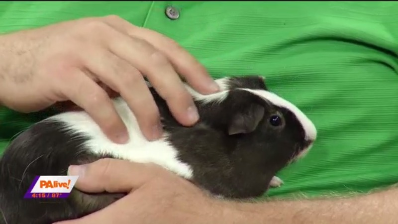 PA live! Pet of the Week August 9, 2021